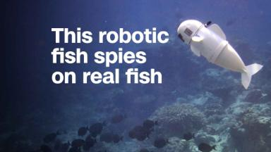 This robotic fish spies on real fish