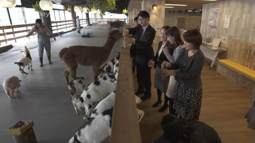 Could future offices be homes for farm animals?