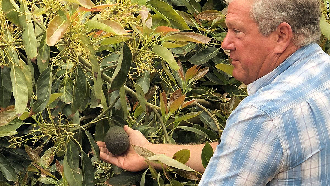 Amid immigration crackdown, this avocado farmer is struggling to find workers