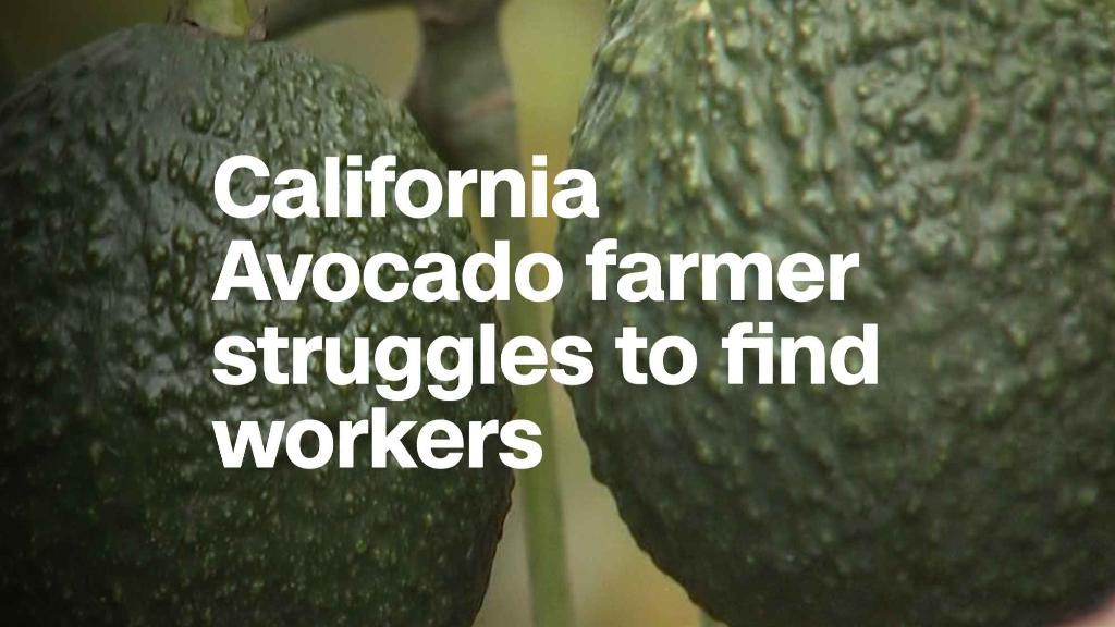California avocado farmer struggles to find workers