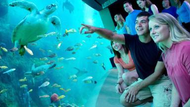SeaWorld makes a big splash: Attendance up, stock soars