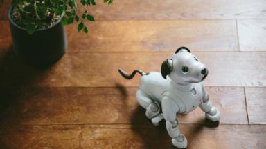 Sony's cute -- and super smart -- robot dog is coming to the US