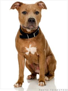 Security dog