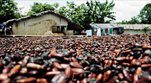The human cost of chocolate