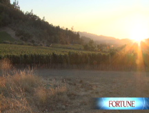 Napa Valley glory or bust